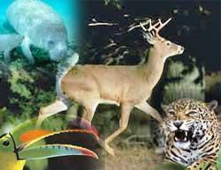 Tráfico de especies